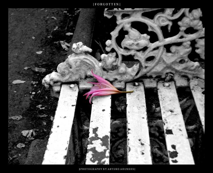 http://www.liveinternet.ru/images/attach/110/110915_Forgotten_by_dead_lotus.jpg