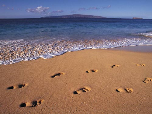 beach.jpg (500x375, 50Kb)