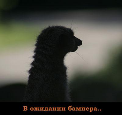 gde_bamper.jpg (400x375, 14Kb)