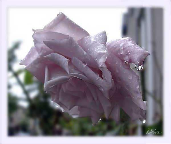http://www.liveinternet.ru/images/attach/2470/2470107.jpg