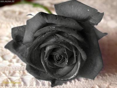 http://www.liveinternet.ru/images/attach/2519/2519884.jpg