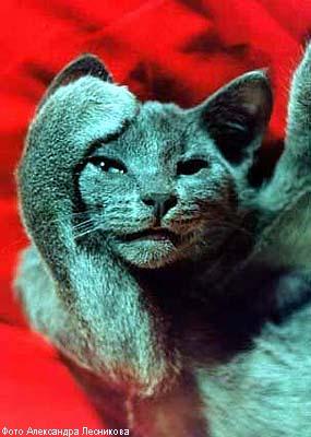 кошка.jpg (285x400, 22Kb)