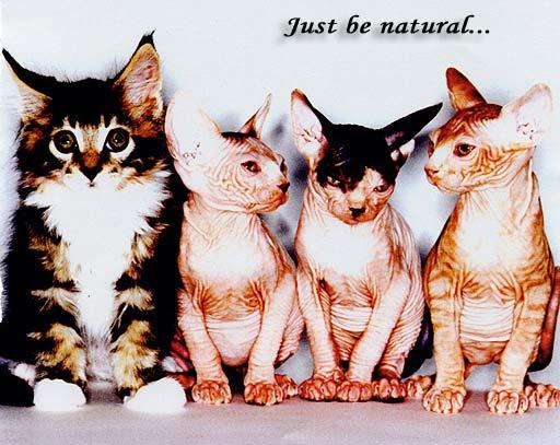 kitten.jpg (512x407, 46Kb)