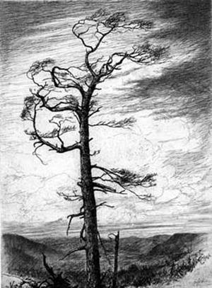 tree.jpg (300x407, 83Kb)