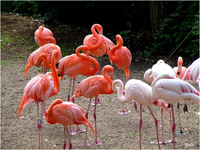 http://www.liveinternet.ru/images/attach/289/289287_flamingo1.jpg