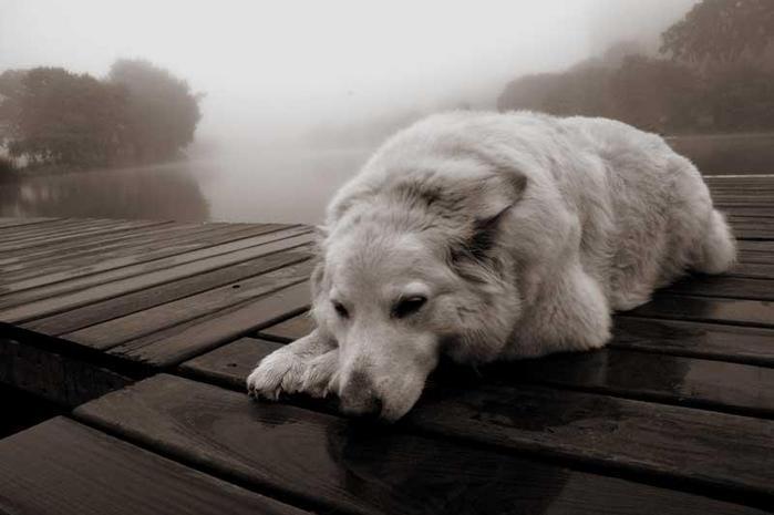 http://www.liveinternet.ru/images/attach/3428/3428616.jpg