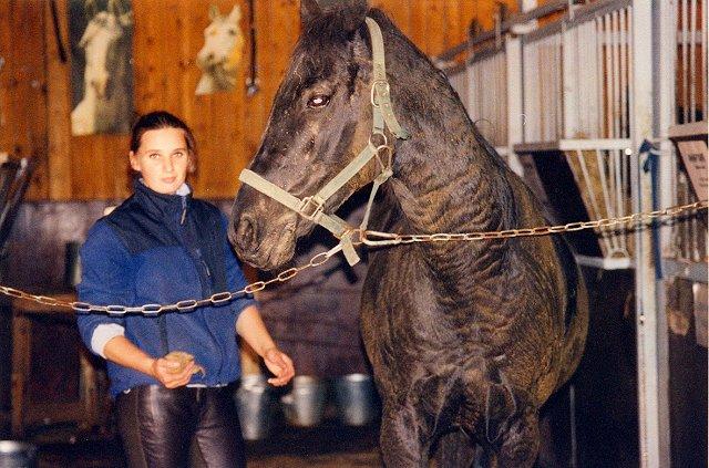 Разведение лошадей в домашних условиях : кормление, содержание и уход