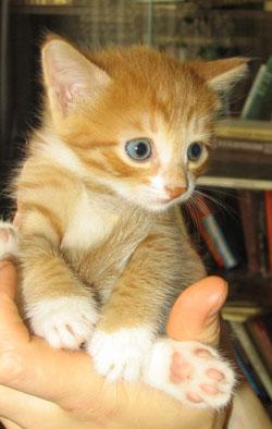 cat2.jpg (250x394, 23Kb)