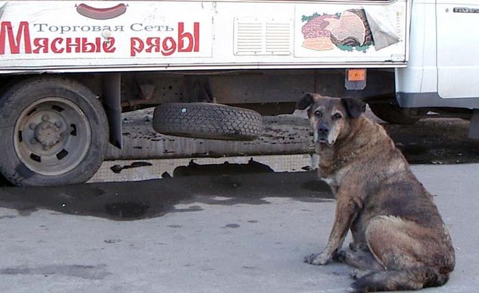 собак.jpg (699x429, 133Kb)