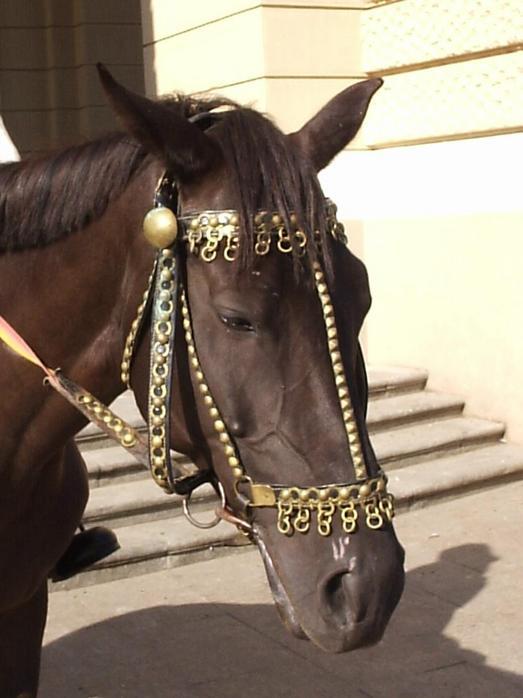 лошадь.JPG (523x698, 53Kb)