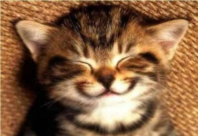 Cat%20smile.jpg (400x275, 22Kb)