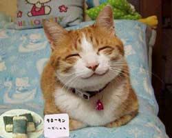 cat-smile-large.jpg (250x200, 8Kb)