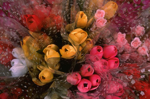 Flowers.jpg (510x335, 56Kb)