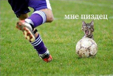 cat_footbol.jpg (447x300, 21Kb)