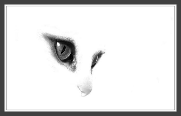 cat_now.jpg (699x448, 10Kb)