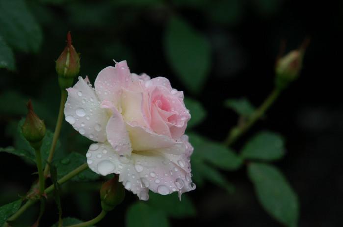 http://www.liveinternet.ru/images/attach/505/505154_Flower4.jpg