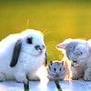 580123_pets9305.jpg (100x100, 12Kb)
