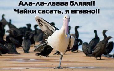 чайки.jpg (370x231, 62Kb)
