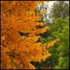 autumn_03vladi.jpg (100x100, 7Kb)