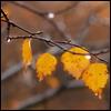 autumn_18vli.jpg (100x100, 5Kb)