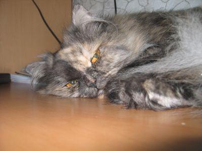 cat.jpg (400x300, 24Kb)