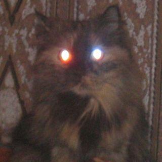 cat2.jpg (320x320, 12Kb)