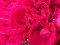 Д- М цветок.jpg (200x150, 11Kb)