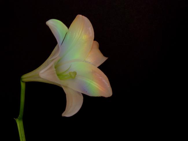 rainbow_flower.jpg (650x488, 91Kb)