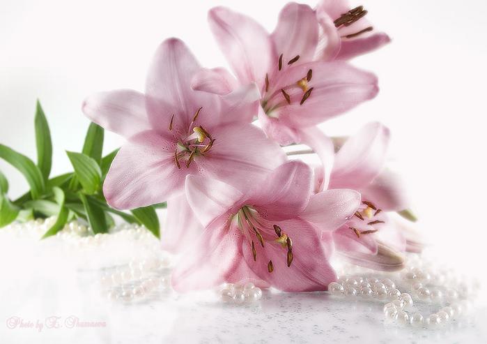 http://www.liveinternet.ru/images/attach/289/289665_950379.jpg